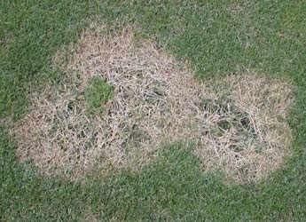 Lawn Problems | Part 2 - Dead Patches
