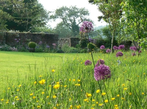 Lawns for Wildlife