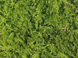 fairy rings in lawn how to get rid of