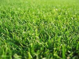 How to Look After New Turf