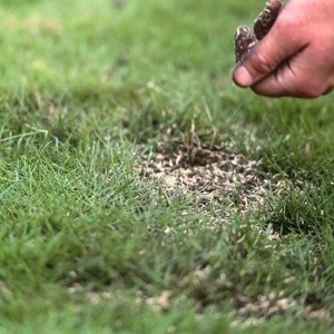 Turf vs Seed: Patching Lawn Turf