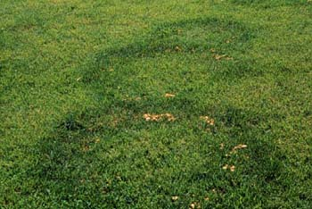 fairy-ring-type-2