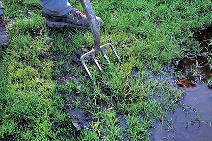 Lawn Problems 10 - Waterlogged Lawn