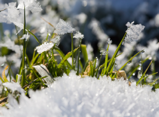 Looking After Your Lawn in Winter