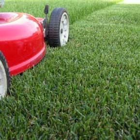 lawn-care-tips-summer