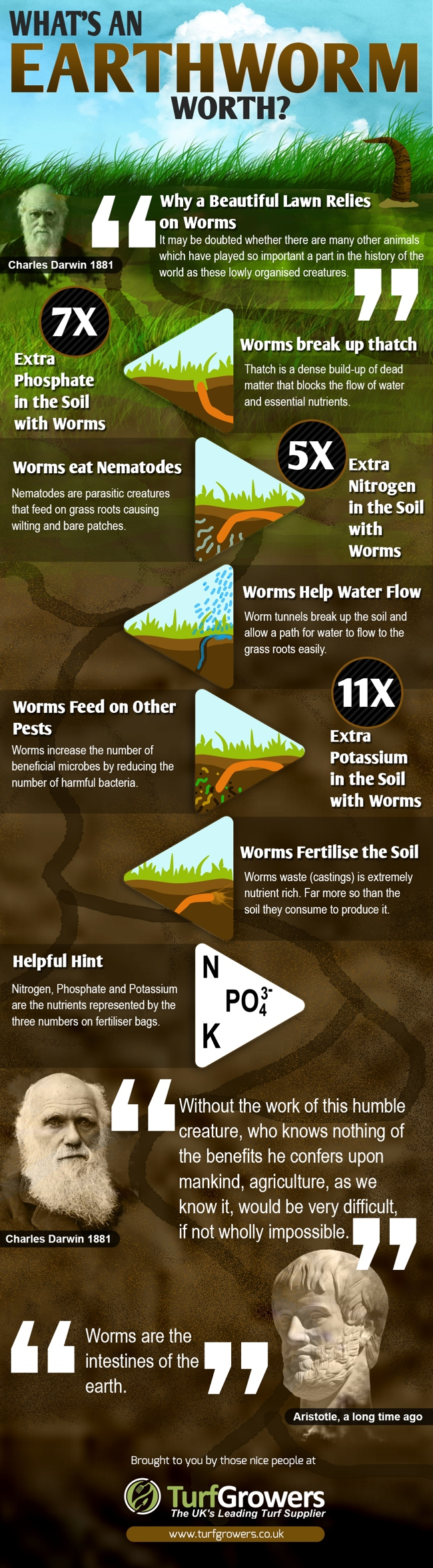 worms-infographic