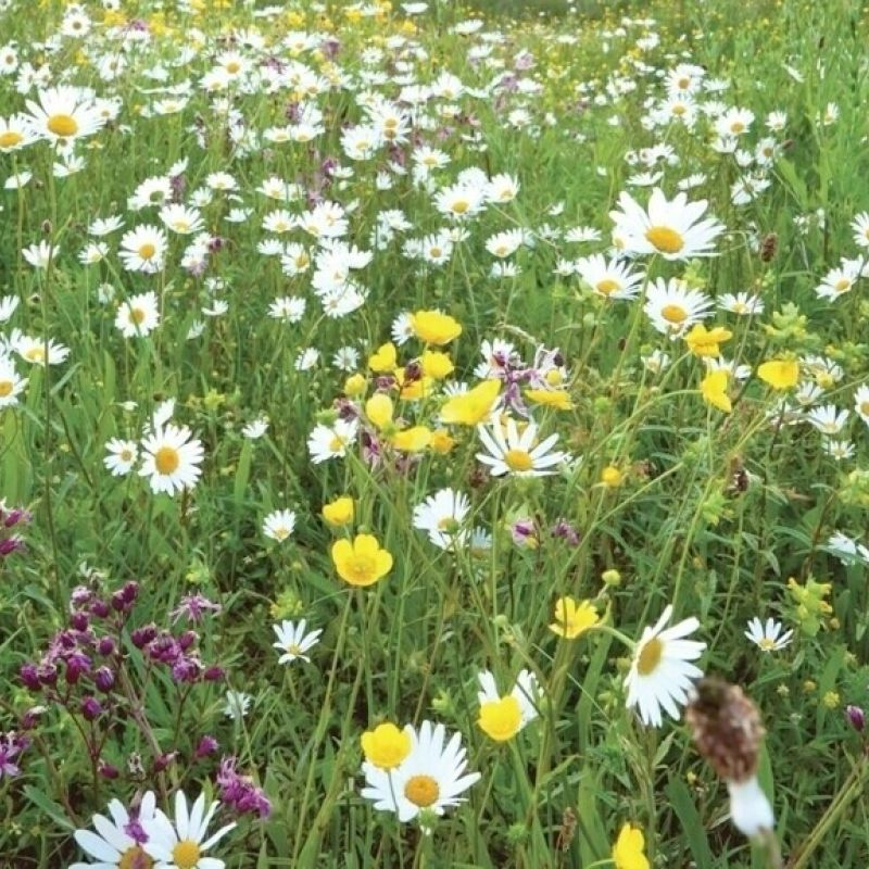 Traditional Wildflower Turf